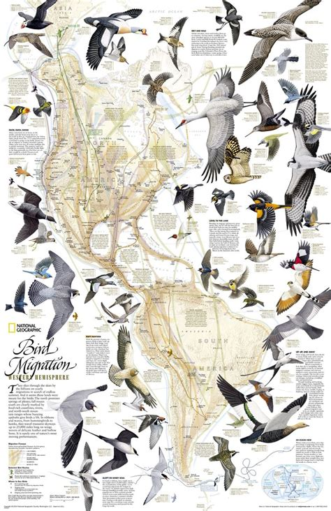 National Geographic Bird Migration Map