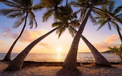 Sunrise Palm Trees Tropical Guadeloupe Island Summer
