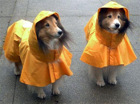 top   waterproof dog raincoats  hood  edition