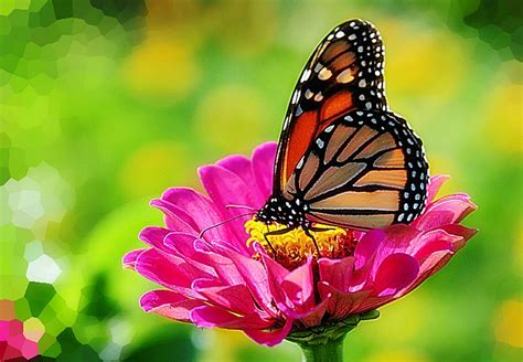 Be inspired by the beauty of nature with this gorgeous collection of flower wallpapers and images. Monarch Butterfly Wallpapers - Wallpaper Cave