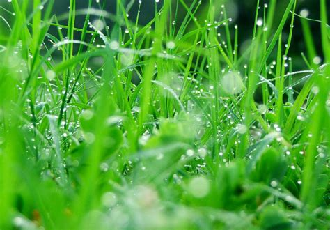 summer refreshing wallpapers green nature wallpapers