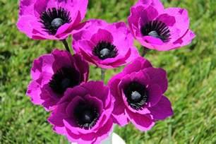 bleeding heart flower beautiful anemone flower weneedfun