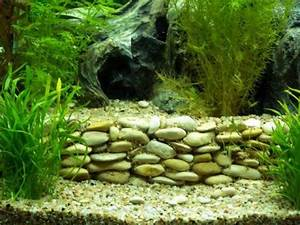 Idee Decoration Aquarium : terrassement avec pierres ~ Melissatoandfro.com Idées de Décoration