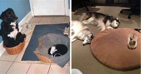 cats  stole dog beds  didnt   care