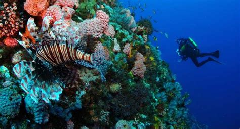 Best Dive Spots In The World by 10 Of The Best Scuba Diving Spots In The World