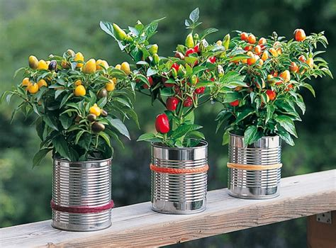 20 Tin Can Craft Ideas  Flower Vases And Plant Pots. Small Backyard Pool And Hot Tub. Kitchen Ideas With Black And White Tiles. Kitchen Ideas Ideas. Rectangular Bathroom Tile Ideas. Small Kitchen Ideas With Island. Gift Ideas Girlfriend. Color Ideas For Kitchen With Cherry Cabinets. Bathroom Before And After Modern