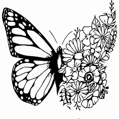 Coloring Adult Cricut Mandala Butterfly Svg Flower