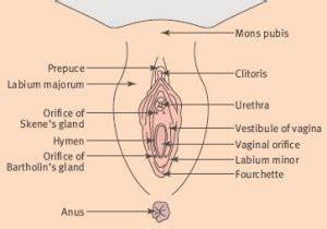 Bartholin Gland – Pictures, Location, Problems, Abscess ...