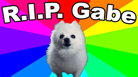 gabe  dog died remembering  bork king thoughts