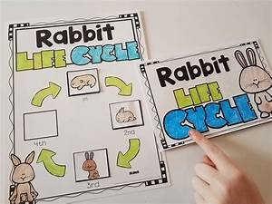 Rabbits  Nonfiction Reading And Writing Activities