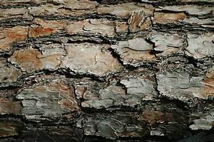 Rough Textures Photograph by Olga Smith
