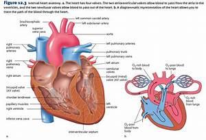 Congestive Heart Failure  Simplified
