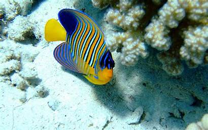 Fish Saltwater Sea
