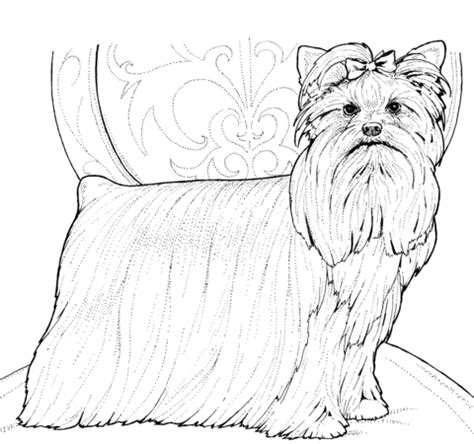 yorkshire terrier  yorkie coloring page  printable coloring pages