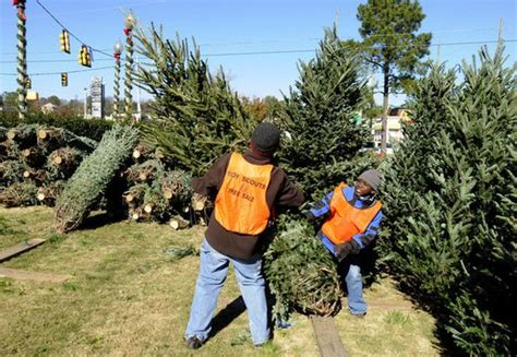 real christmas tree cost walmart live tree price up marvin s walmart home depot more al