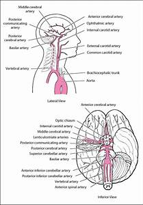 Overview Of Stroke - Neurologic Disorders