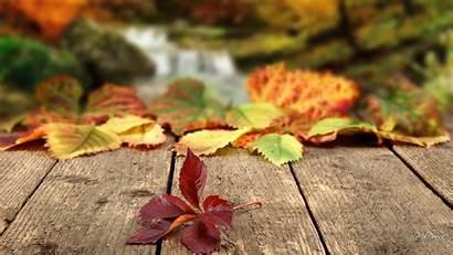 Leaves Autumn Fall Falling Season Nature Changes