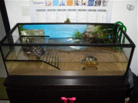 exemple aquarium pour tortue