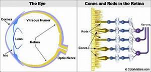 Eyes Diagram Rods Cines : look inside the eye ~ A.2002-acura-tl-radio.info Haus und Dekorationen