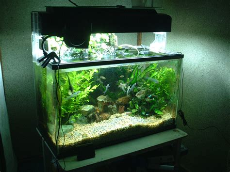 fish tank ecosystem top suggestions for aquaponics the