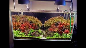 Best Aquarium Lights Advanced Guide To Lighting A Planted Tank Basics First