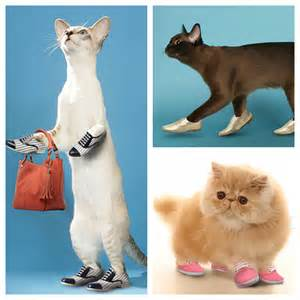 charenza shoes for cats the cat