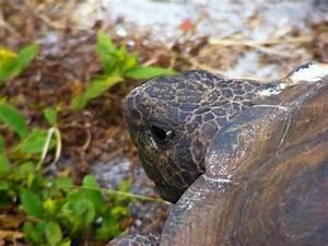 Comment Savoir Si L On Est Enceinte : comment savoir si ma tortue de terre est enceinte ~ Dode.kayakingforconservation.com Idées de Décoration