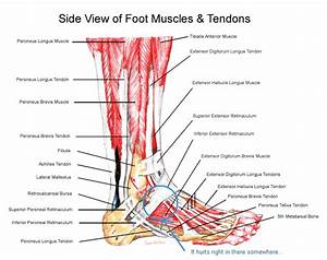 Running - Pain In The Top Of My Foot