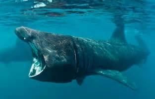 facts  prove sharks   pretty awesome