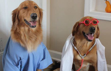 Dog Doctor Meme - healthy paws pet insurance rated best in 2017