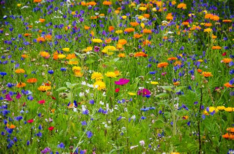 Blumen Auf Der Wiese by Finding A Green Space Can Go A Way Farm And