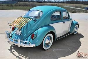 Beautiful California Beetle