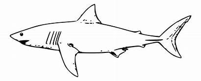 Shark Clip Clipartpanda Clipart Panda Terms