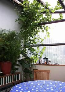 Kletterpflanzen Für Balkon : begr nter balkon mit pfeifenwinde ~ Buech-reservation.com Haus und Dekorationen