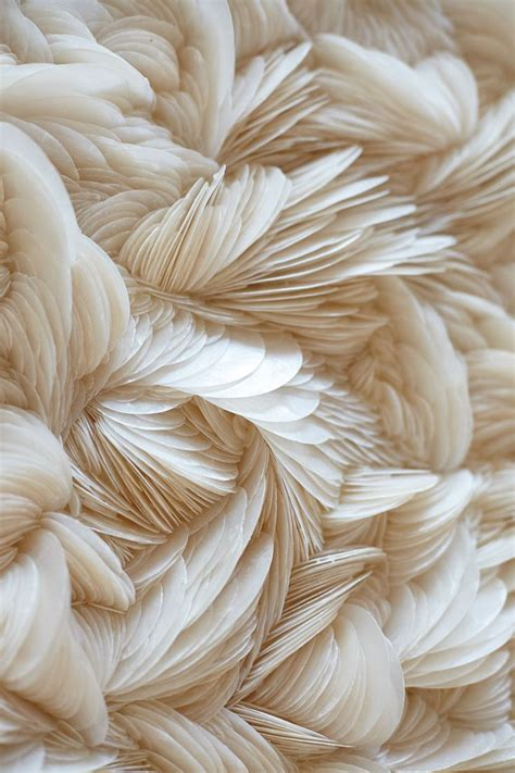 feathers beige aesthetic aesthetic wallpapers january
