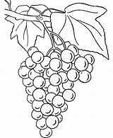 Grapes Coloring Colouring Drawing Pages Line Raisins Picolour Printable Getdrawings Paintingvalley Getcolorings sketch template