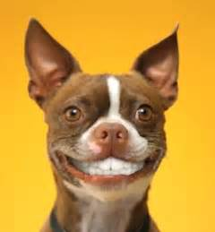 Dogs Smiling with Teeth