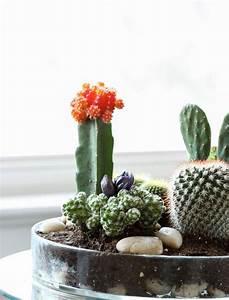 Comment Entretenir Un Cactus : comment faire un jardin de cactus ou de succulents pour l ~ Nature-et-papiers.com Idées de Décoration