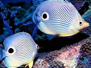 Beautiful Fish Wallpapers ~ Landscape Wallpapers|HD ...