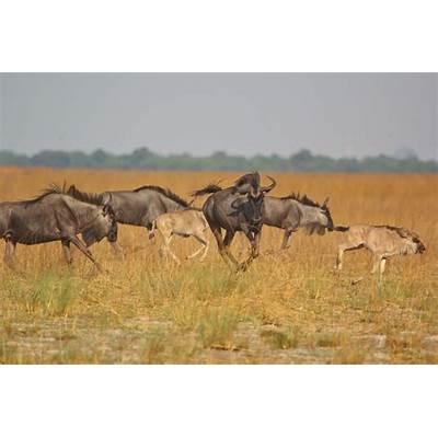 ZambiaAfrican Overland Tours