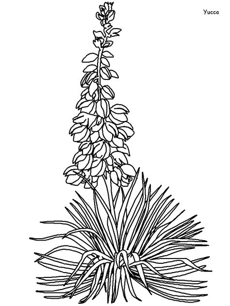 printable yucca flowers coloring pages coloringpagebookcom