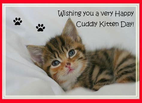 cuddly kitten day cat lovers cuddly kitten day ecards