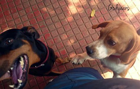 Do dogs get jealous?   Godyears