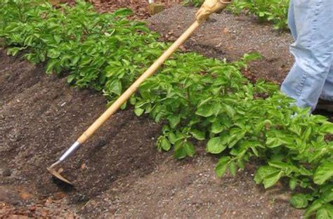 rid  weeds  vegetable garden