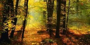 Bilder Vom Wald : artland poster leinwandbild herb natur wald b ume landschaften foto online kaufen otto ~ Yasmunasinghe.com Haus und Dekorationen