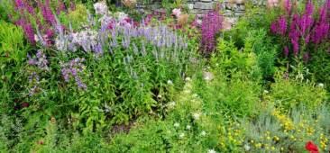 Garten Pflanzen Umsetzen by Bienenfreundliche Pflanzen Fr Den Kleinen Garten Oder Den