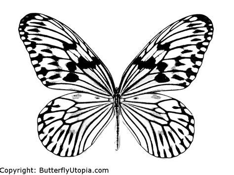 butterfly coloring pages butterfly coloring pages