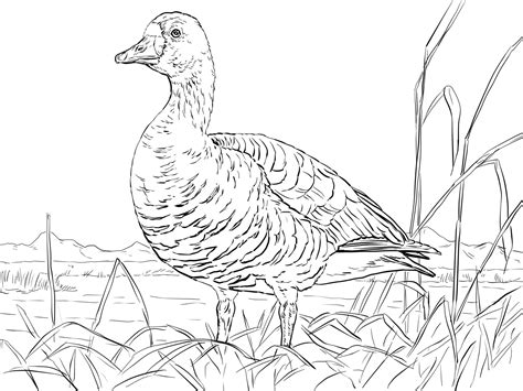 goose coloring pages    print