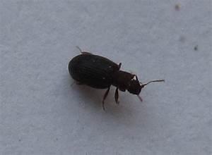 Insecte De Maison : invasion insecte maison paille black bedroom furniture ~ Melissatoandfro.com Idées de Décoration