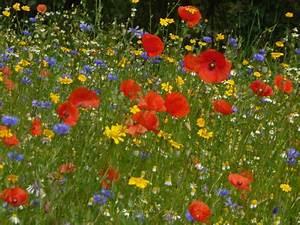 Graines Fleurs Des Champs : photo bouquet de fleurs des champs florideeo ~ Melissatoandfro.com Idées de Décoration